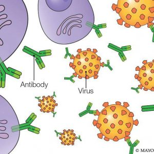 Monoclonal antibodies: Update on this COVID-19 experimental therapy
